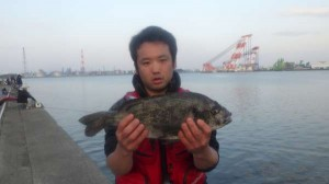 泉大津 【年無しチヌ】釣れています♪♪