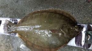 貝塚人工島水路で良型カレイまだまだ狙えます!!