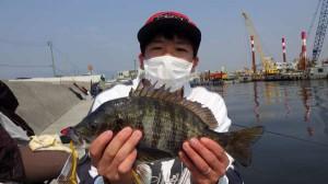 丸島・チヌがよく釣れています!