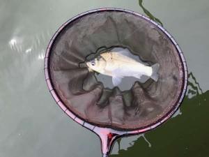 貝塚・水藻フィッシングセンターでへらぶな釣り♪
