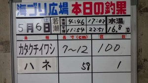 鳴尾浜公園 カタクチイワシが100匹!!