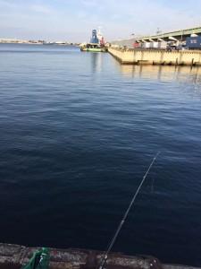 貝塚港でエビ撒いてきました。