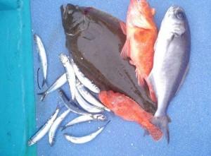 白浜沖にてアンダーベイト開幕!BIG高級魚が