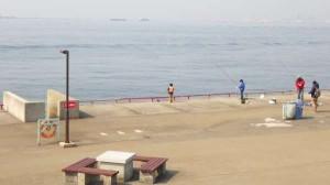 鳴尾浜公園 チヌの時合あり