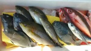 【潮岬沖】オキアミの天秤ズボ釣りの釣果です!
