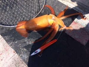 【たいし丸】中深海ジギングでジャンボクロムツ!