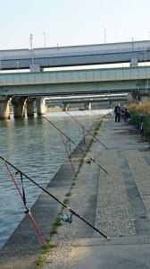 今朝は河川敷の状況が良くなりました。