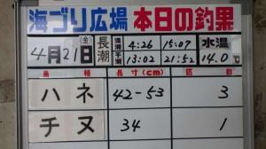 鳴尾浜公園 スズキとの格闘!