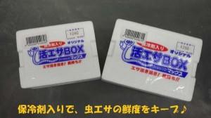 今晩は「天ぷら」!チョイ投げで【キス】♪23日マリーナ大波止RT