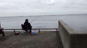 鳴尾浜公園 今朝のサビキ釣り