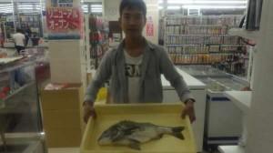 チヌの釣果を頂きました。