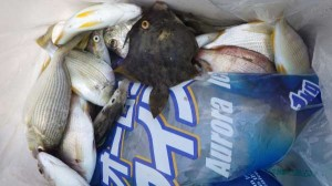 只今、真アジ入れ食い中♪マリーナ海釣り公園の1番が激熱!16日RT