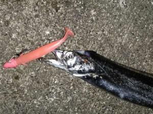 神戸港ワインドタチウオ ~スローワインドは釣れるし楽しいし楽~