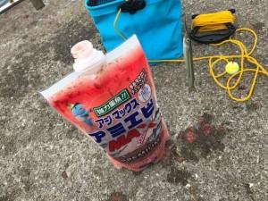 【南芦屋浜サヨリちゃん】お昼も好調☆サビキ釣りとセットでどうぞ♪