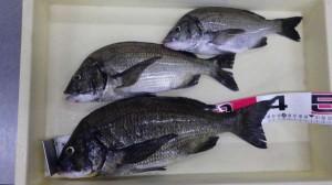 紀州釣りの釣果を頂きました♪