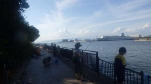 汐見埠頭 サビキが絶好調~♪