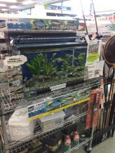 淀川で淡水小物釣り(^O^)
