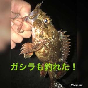 『根魚』イイね!!垂水RTと根魚情報♪