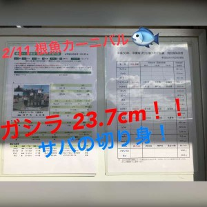 """【平磯】5週連続""""チヌ""""GETなるか!?!?"""