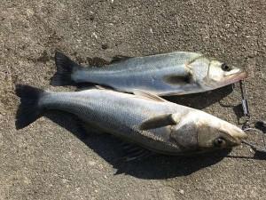 ケーソン入口は快適にハネ釣りできます
