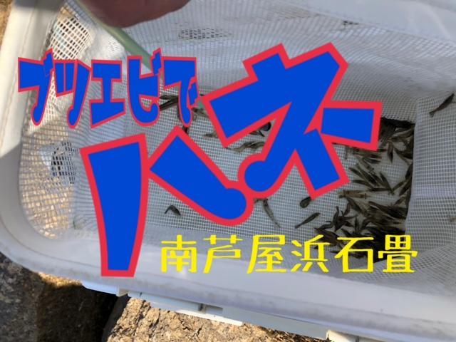 関西 釣果